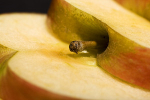 apple slice closeup