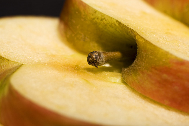 apple slice closeup