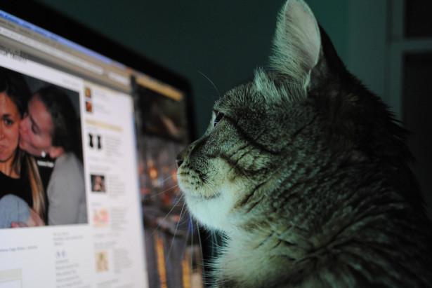 Facebook Cat