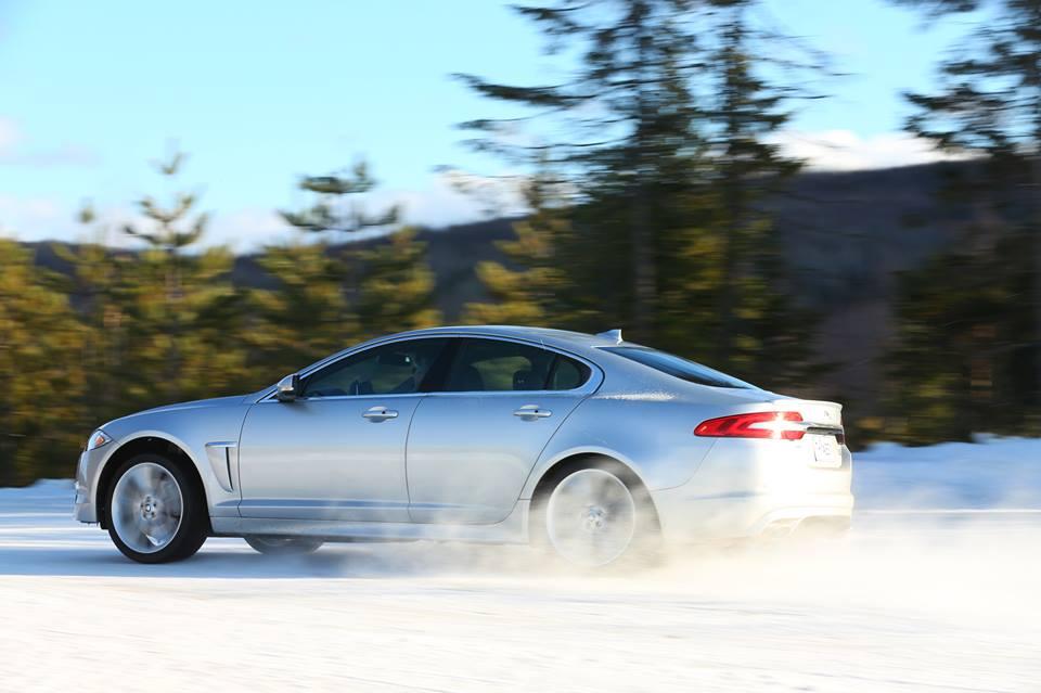 Jaguar in Snow