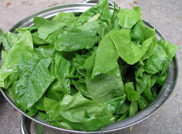 Source: http://commons.wikimedia.org/wiki/File:Spinach_leaves.jpg