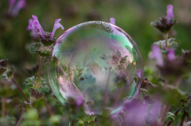 Risks From Current Monetary Policy: The Everything Bubble