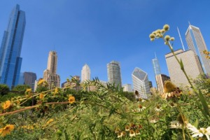 Here's What Chicago Has to Say About the Economy
