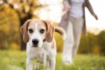 Get Fit Alongside Fido: 5 Ways to Work Out With Your Pet