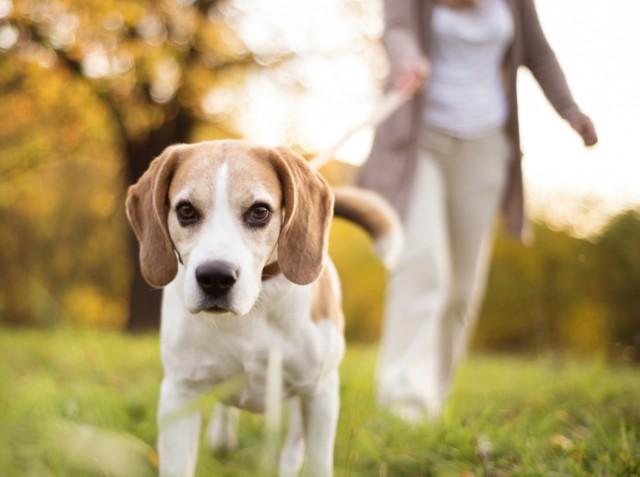 A dog walker
