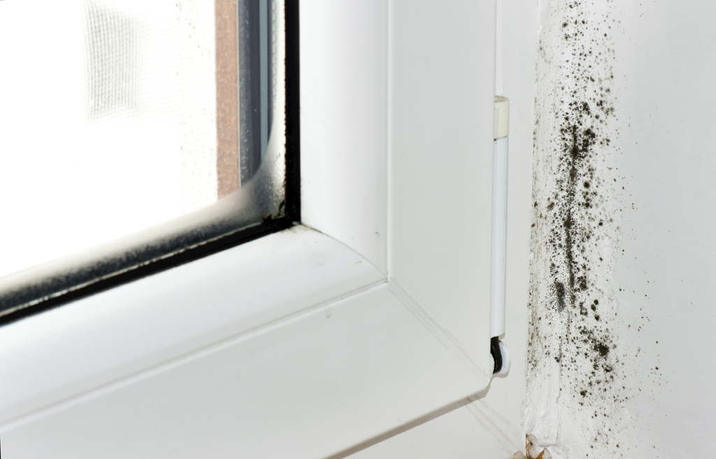 window with black mold spores