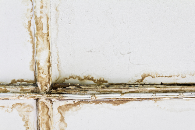 Home mold test