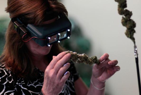 A woman inspects marijuana buds