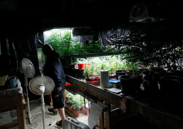 An indoor marijuana grow operation