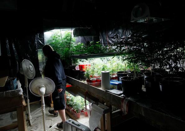 An indoor marijuana grow operation