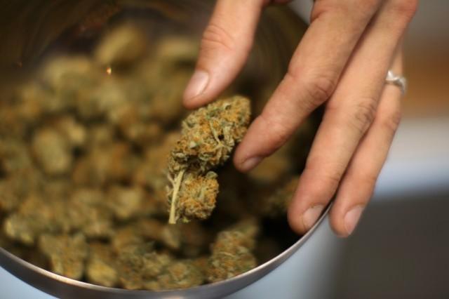 Buds fresh from storage