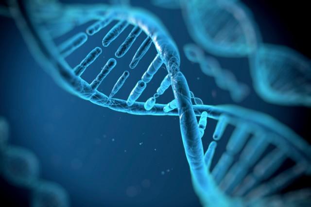genetics, DNA