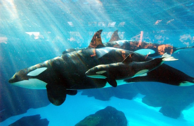 (Photo by Mike Aguilera/SeaWorld San Diego via Getty Images)