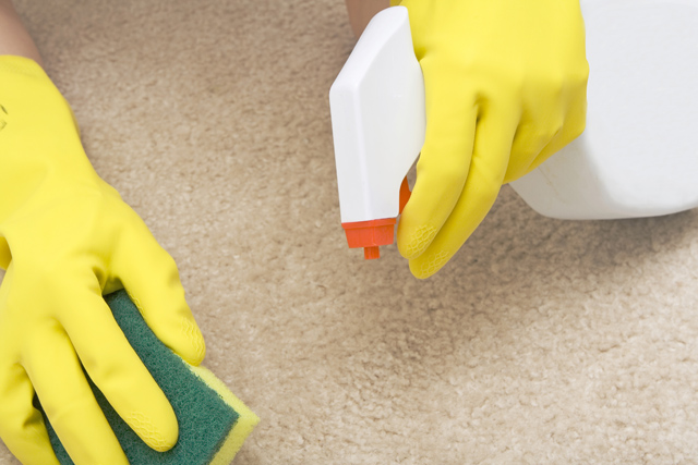 person with gloves on cleaning a carpet with a spray bottle and sponge