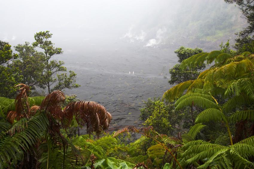 Woodland area of Hawaii
