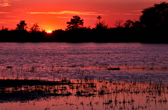 New Jersey Pine Barrens at Sunset