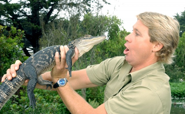 Steve Irwin holds a reptile.