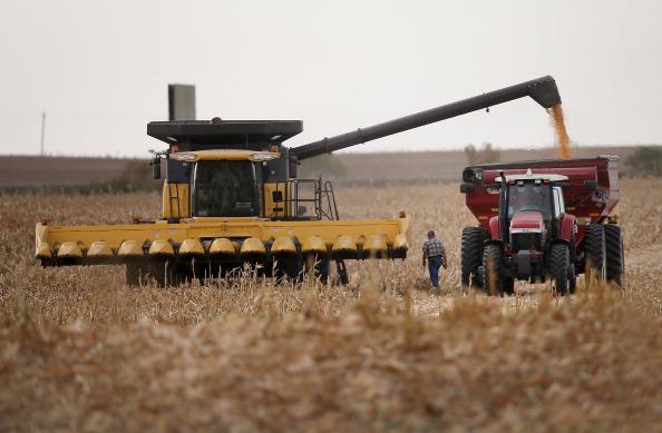Farmers harvest a field of corn