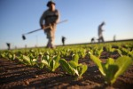 Here's Why American Farmers Don't Want Legal Status For Their Workers
