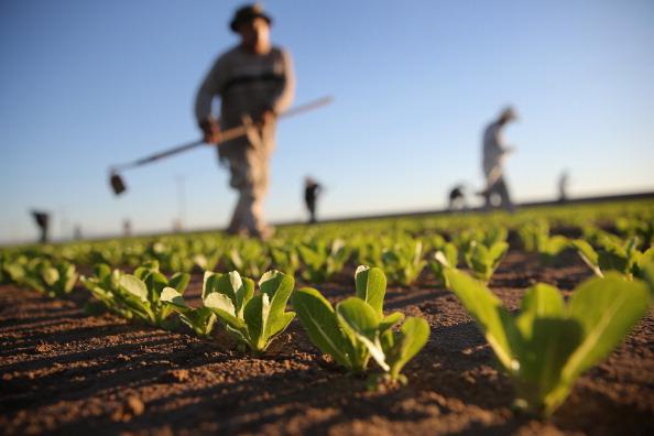 farming crops