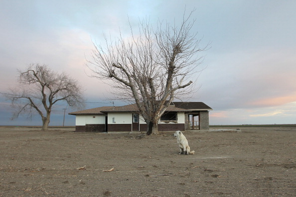 BAKERSFIELD, CA - FEBRUARY 6: A dog hangs around an abandoned farmhouse on February 6, 2014 near Bakersfield, California. Now in its third straight year of unprecedented drought, California is experiencing its driest year on record, dating back 119 years and possible the worst in the past 500 years. Grasslands that support cattle have dried up, forcing ranchers to feed them expensive supplemental hay to keep them from starving or to sell at least some of their herds, and farmers are struggling with diminishing crop water and whether to plant or to tear out permanent crops which use water year-round like almond trees. About 17 rural communities could run out of drinking water within several weeks and politicians are pushing to undo laws that protect several endangered species. (Photo by David McNew/Getty Images)