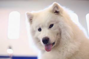 These Are The Most (and Least) Expensive Dog Breeds You Can Buy