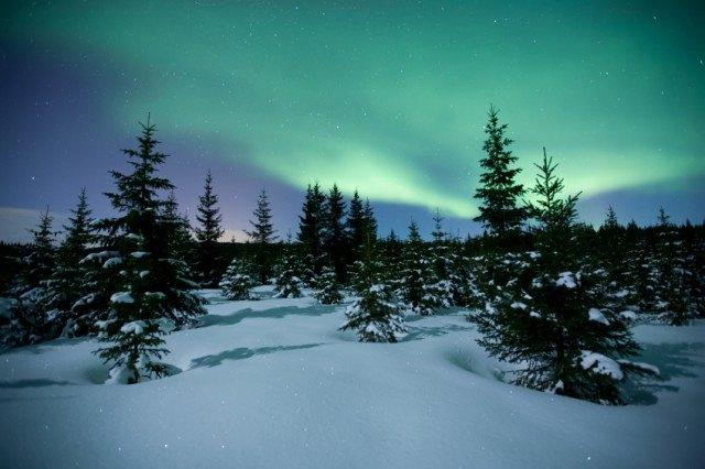 Trees in a polar climate
