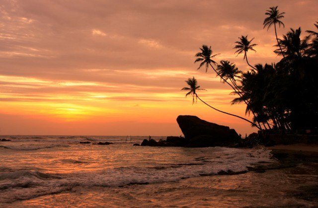 Palm trees, rocks, sunset, Unawatuna, Sri Lanka