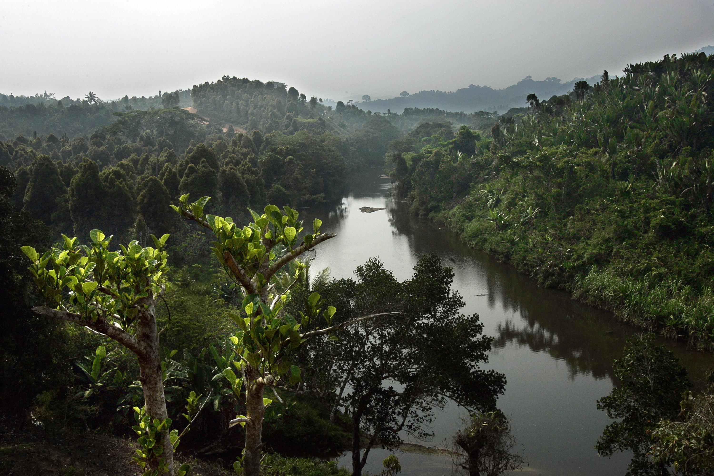 A forest near Andratamarna, Madagascar