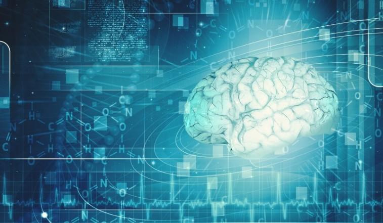 A human brain
