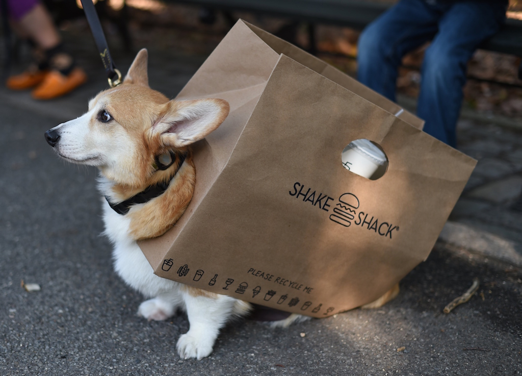 A dog dressed as the Shake Shack participates in the 24th Annual Tompkins Square Halloween Dog Parade on October 25, 2014 in New York City. Thousands of spectators gather in Tompkins Square Park to watch hundreds of masquerading dogs in the countrys largest Halloween Dog Parade. (Photo by Timothy A. Clary/AFP/Getty Images.)