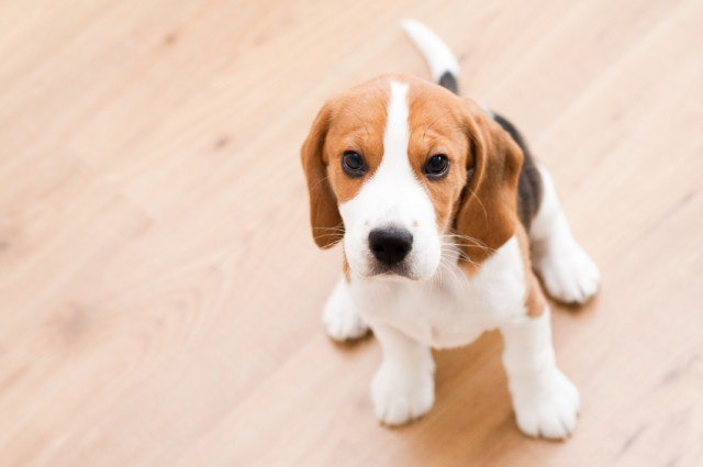 The 21 easiest dog breeds to own for Types of dogs with photos