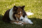 7 Ideas to Help Your Dog and Landscape Live in Harmony