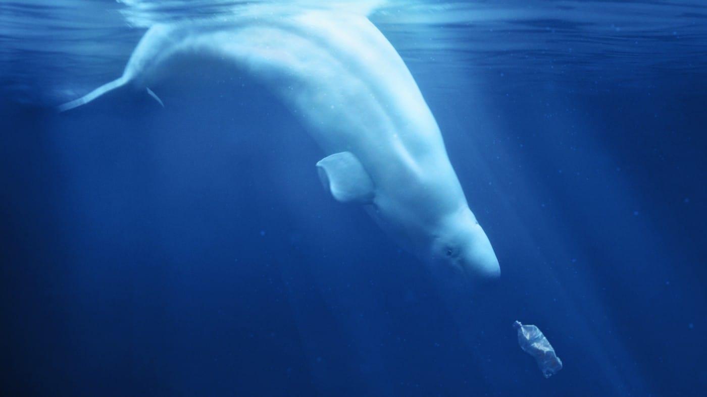 A Plastic Ocean documentary