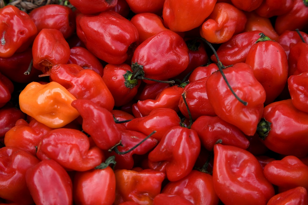 Spicy Recipes That Can Help You Live Longer