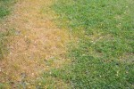 8 Common Lawn Problems (And Their Solutions)