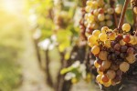 6 Break-the-Mold Wineries to Visit This Summer