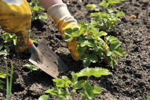 How to Start a Successful Garden
