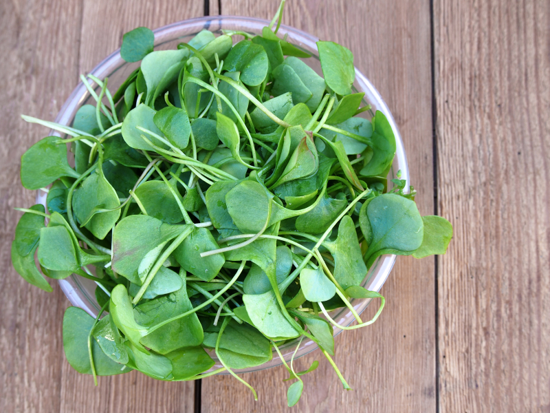 watercress in a bowl
