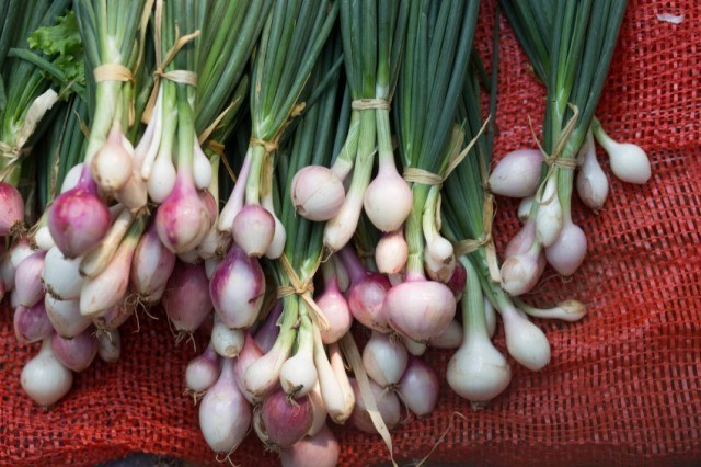 Bundles of green onions on a red sack.