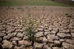 Here's Why California Farmers Aren't to Blame For the Drought