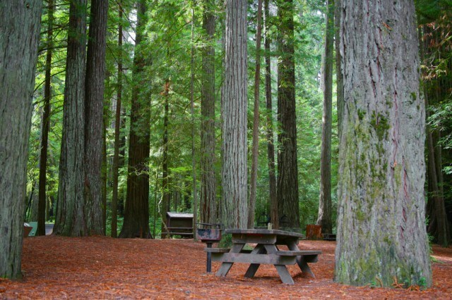 A picnic table among trees.