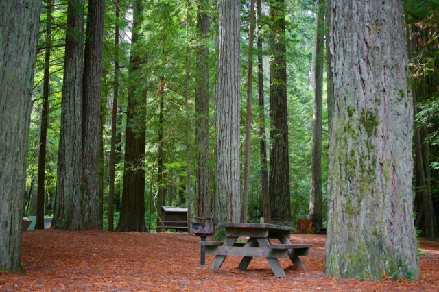 Redwood forest campsite