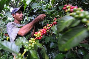 How Coffee Companies Will Need to Confront Warmer Climates