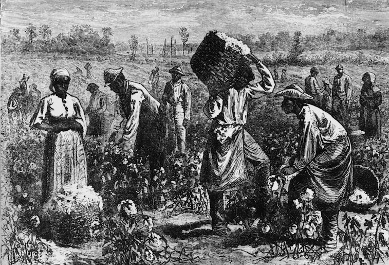 A black-and-white image of slaves picking cotton