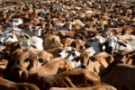 3 Reasons You Should Care Where Your Food Comes From