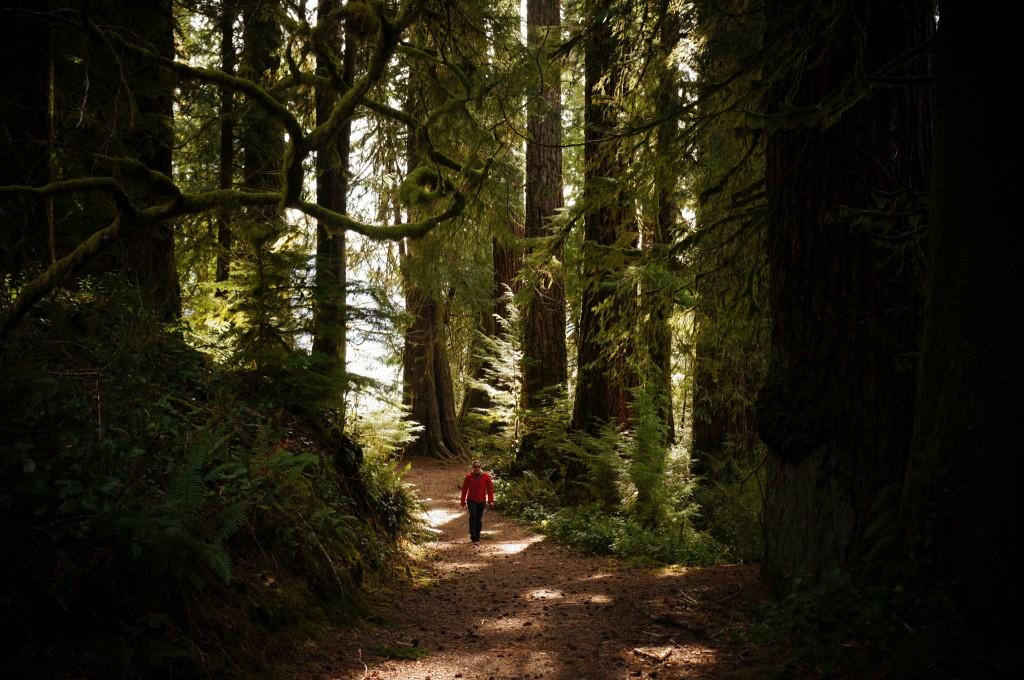 a man walking through the woods