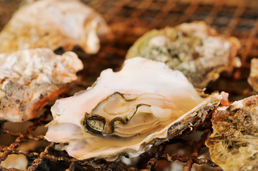Raw oysters | iStock.com