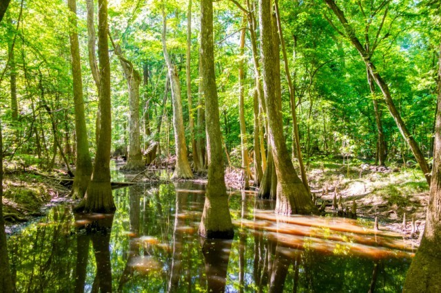 Swamp area where mosquitos can be found