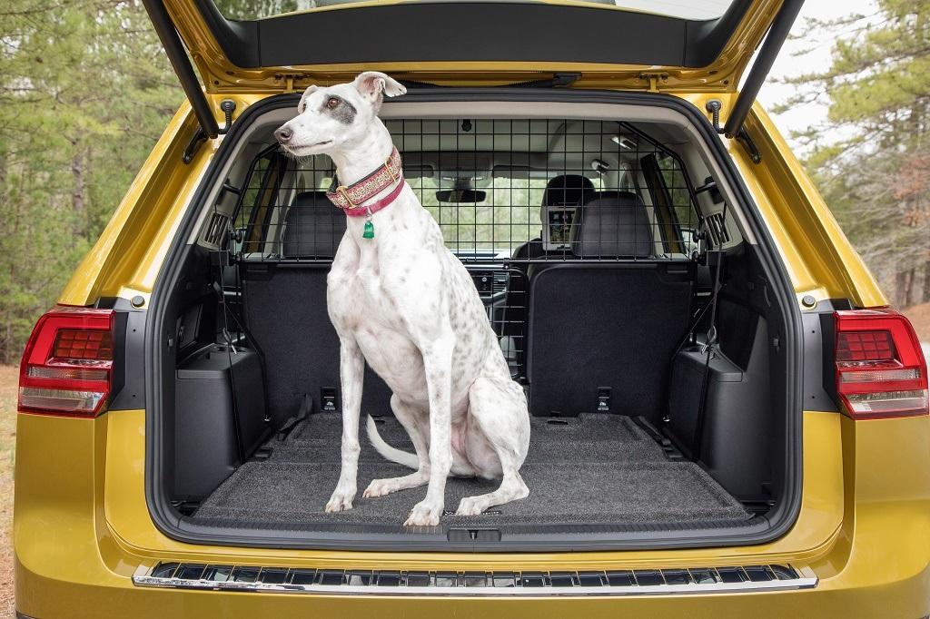 dog sitting in car trunk